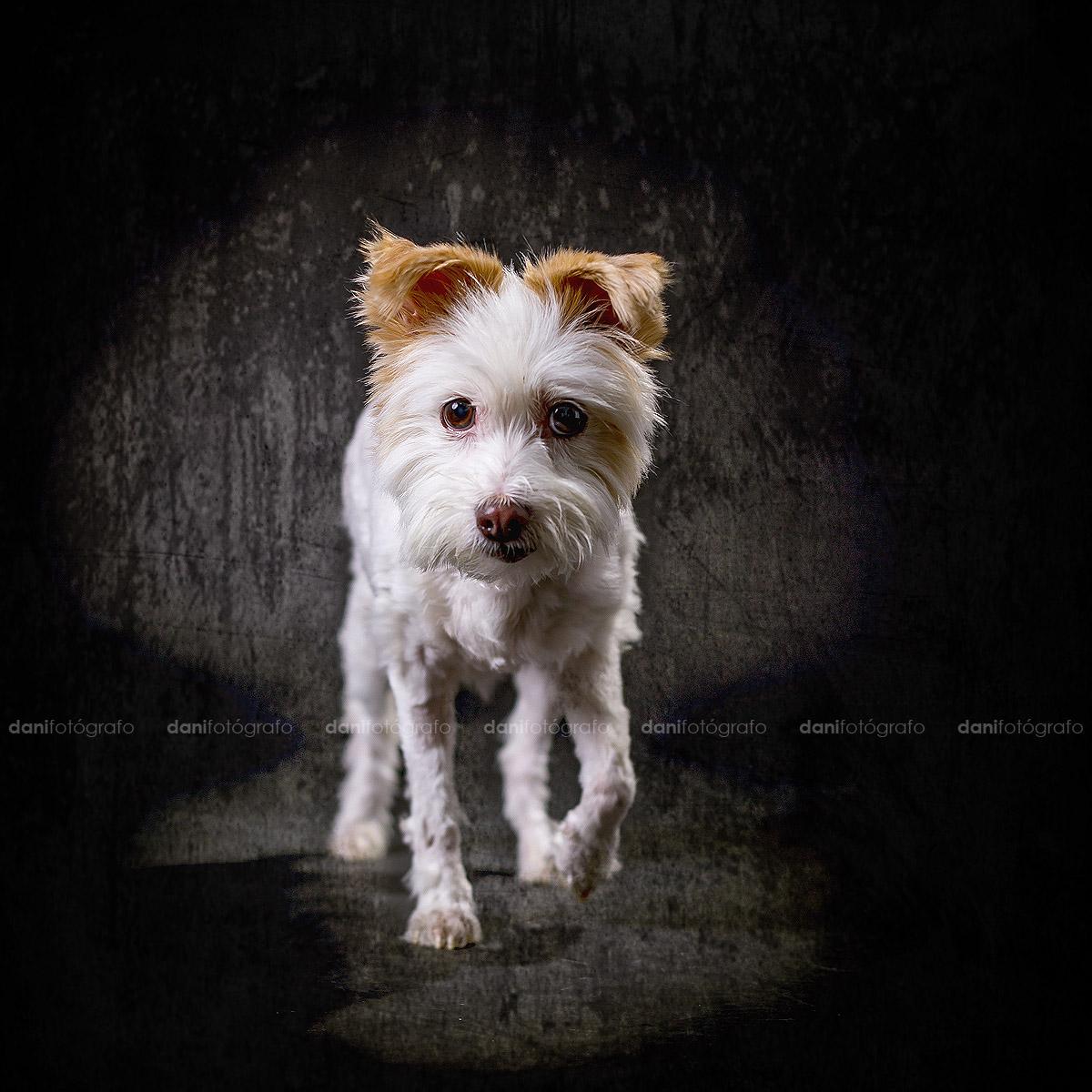 Foto mascota perro gijon Asturias Fotografo